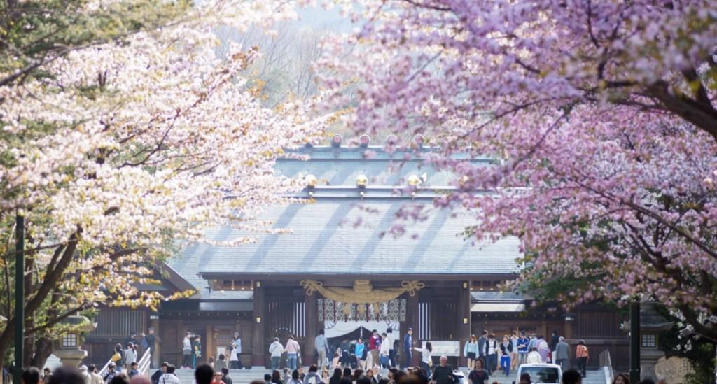 hokkaido-sakura-1024x549