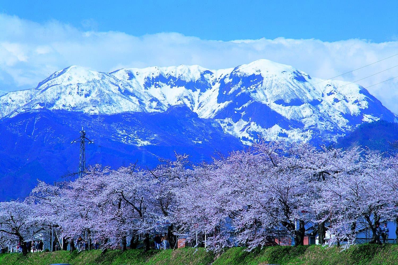 01-Katsuyama-Benten-Sakura_jskftv