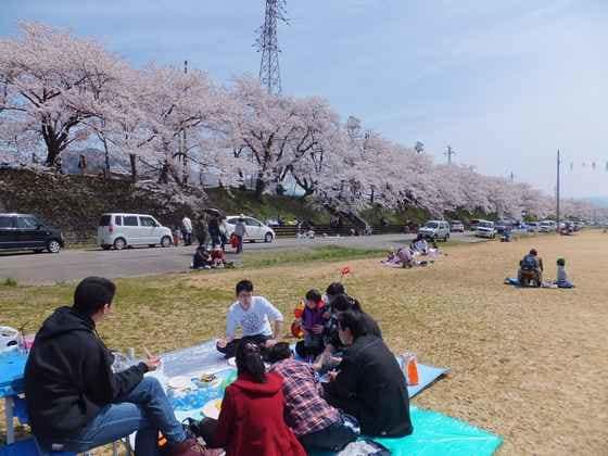 06-Katsuyama-Benten-Sakura_xcluqe